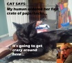Cat Says 1