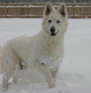 leyna snow